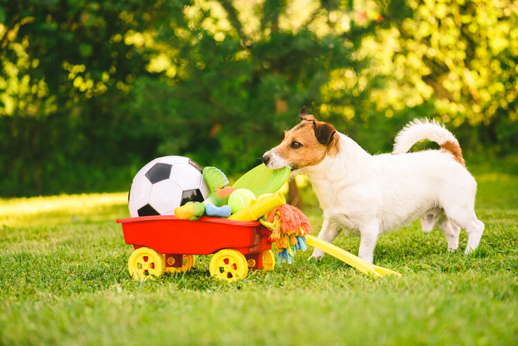 Happy dog chooses flying disc from cart full of dog toys
