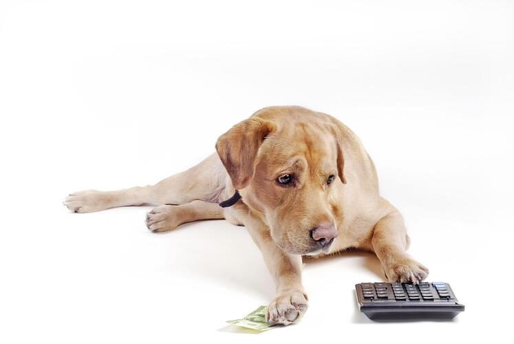 A dog with money and calculator