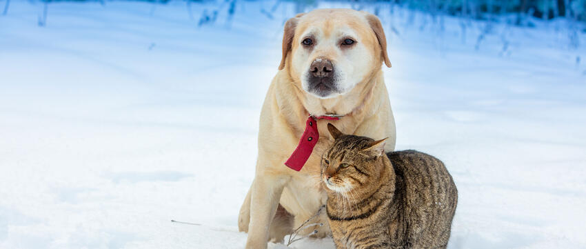 A cat and dog in the snow