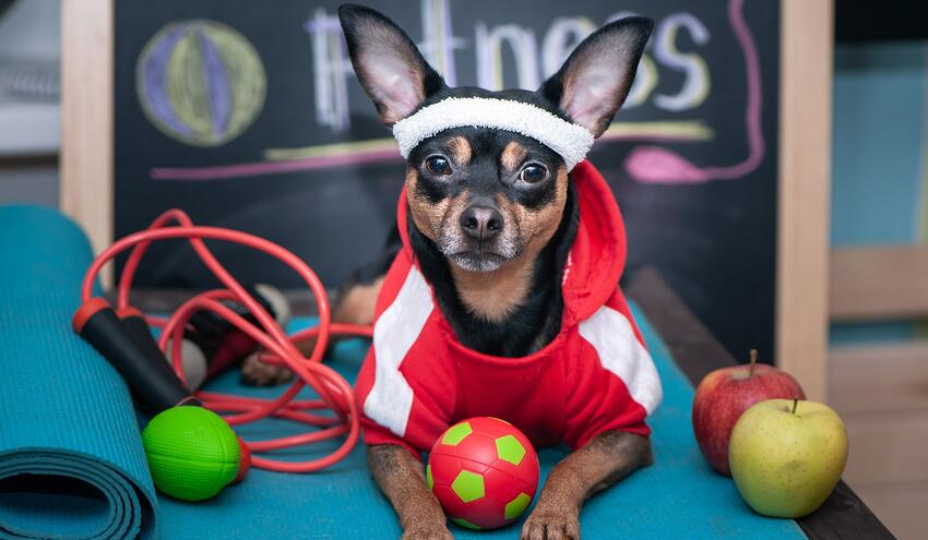 financial wellness and healthcare costs dog