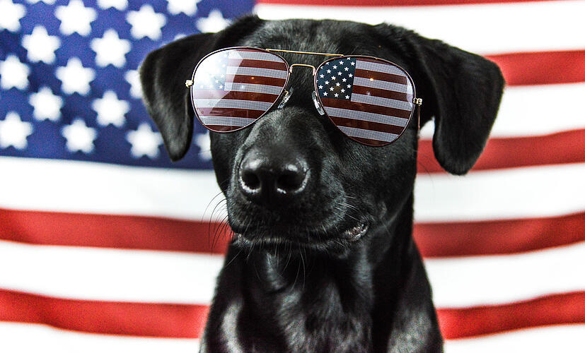 A dog showing his Patriotism